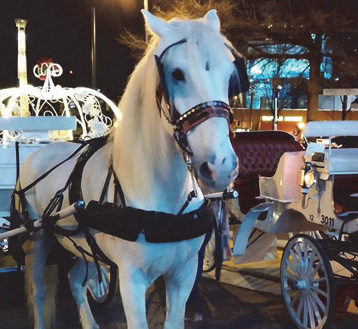 Fantasy Carriages horse drawn carriage rides